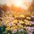 Ogród – miejsce dla każdego domownika